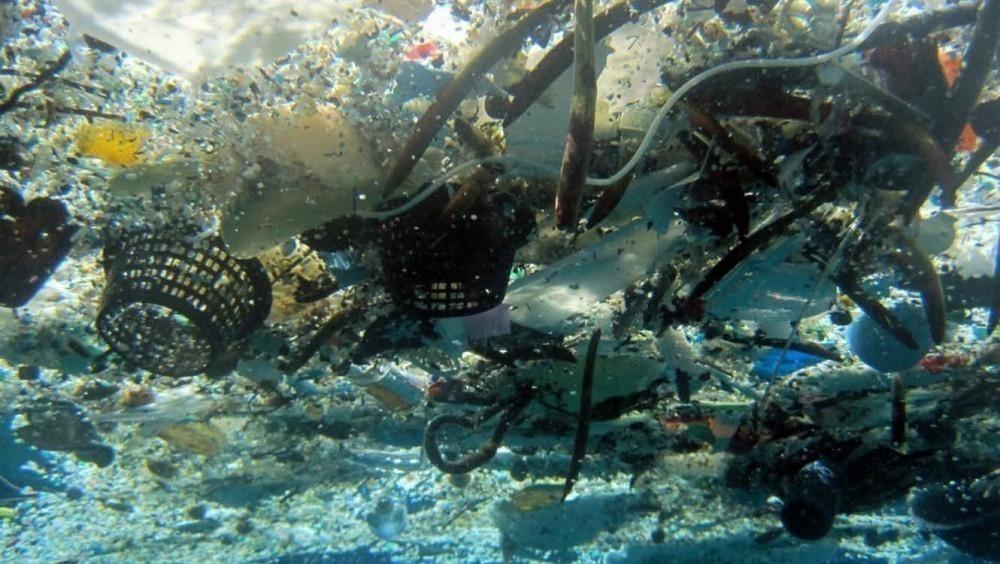 cachalotes que aparecieron sin vida en Alemania tenían residuos plásticos en sus estómagos- historia