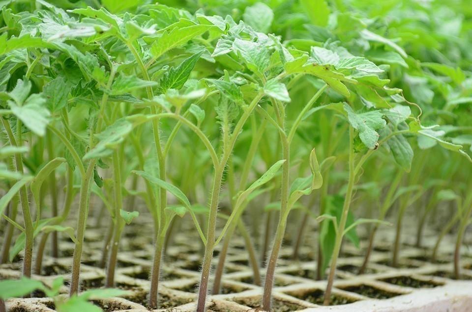 17 plantas en el mismo espacio que una sola- materiales