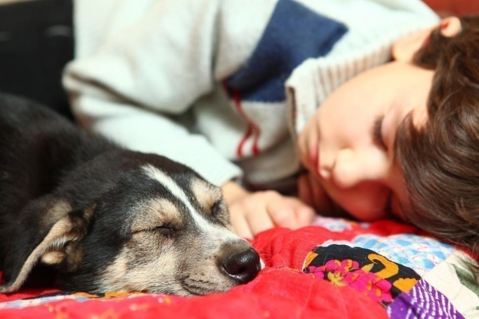 Dormir con mascotas - niño