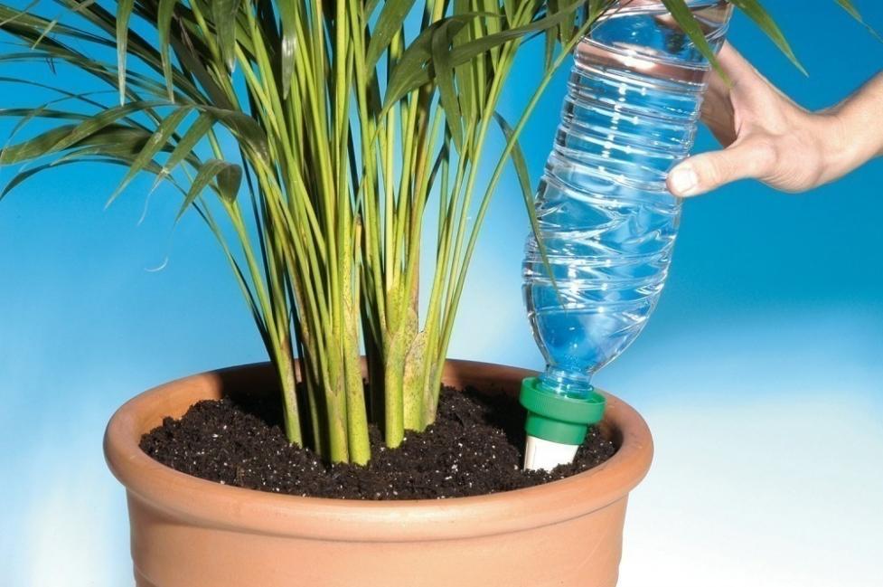 Mantener húmedas tus plantas durante las vacaciones - conos y botellas