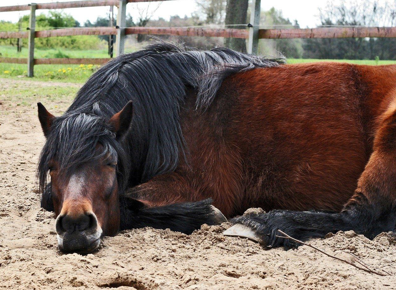 pony-2315097_1280