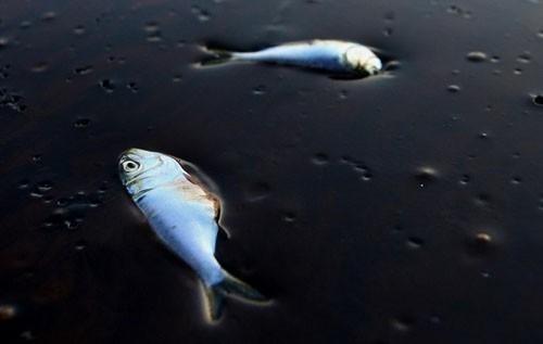 petróleo de algas - contaminación por petróleo