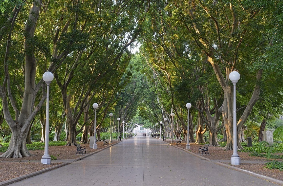 árbol - ciudad- temperatura