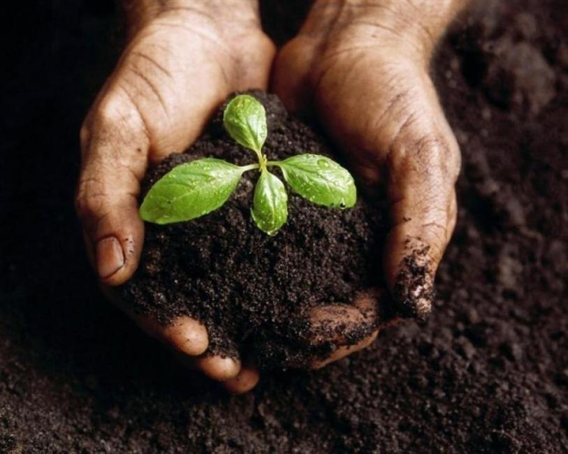 agroecología- monsanto- glifosato