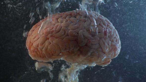 cerebro oxígeno