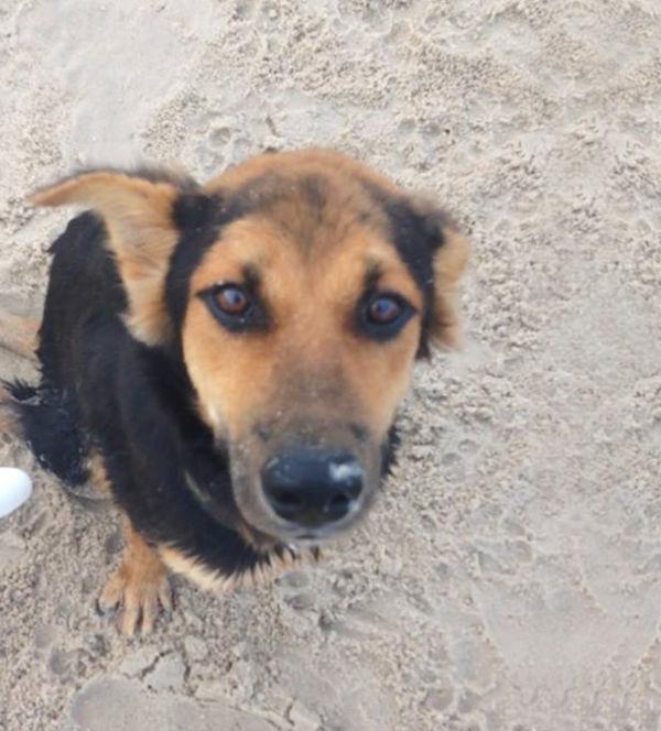 paralyzed-dog-puppy-rescue-thailand-canada-leo-2