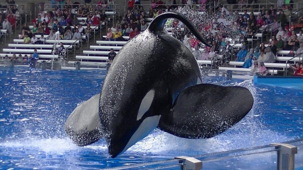murio orca Tilikum