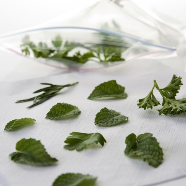 formas de conservar tus hierbas- colgelar