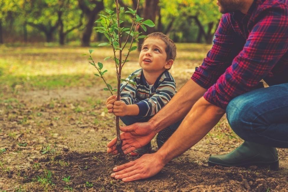 Bariloche- plantar por nacimiento- proyecto