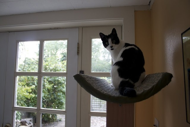 torre para gatos- juego