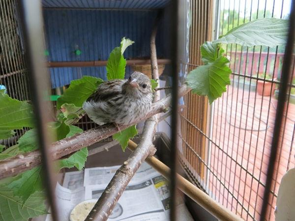bird-day17