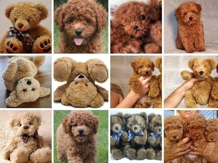 animales que parecen objetos por Karen Zack- oso de peluche