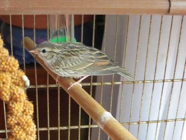 bird-day25