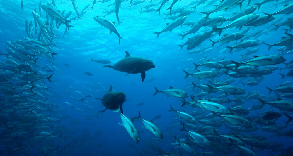 oceános- cambio climático