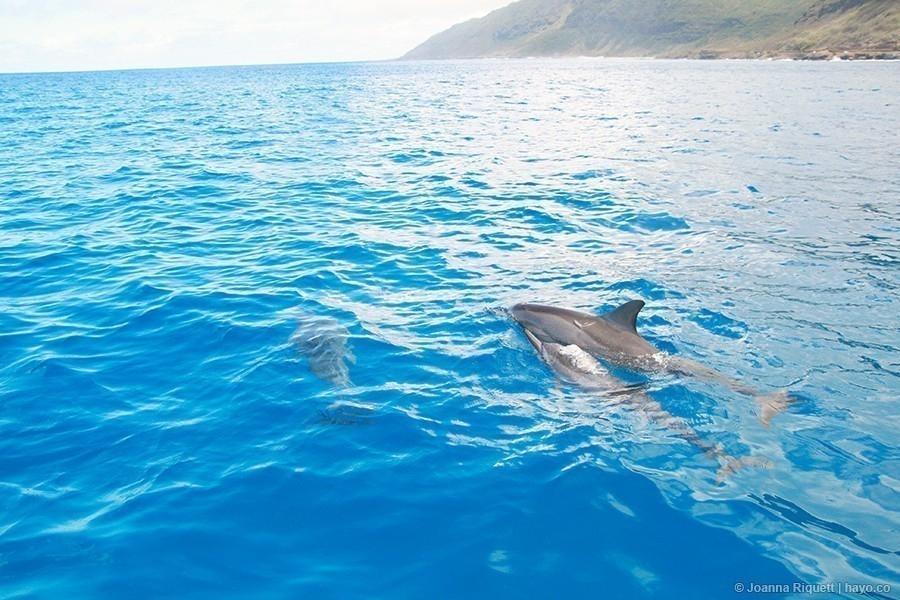 Un proyecto para cuidar a los delfines del estrés causado por los turistas