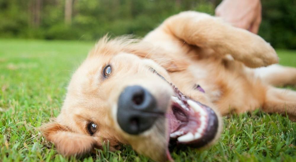lenguaje corporal de los perros - sumisión