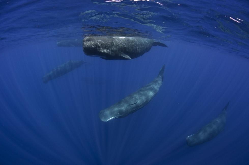 cachalotes que aparecieron sin vida en Alemania tenían residuos plásticos en sus estómagos