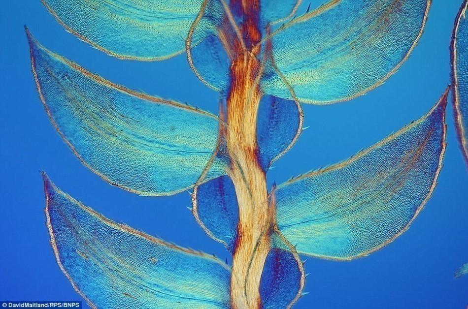 Increíbles fotografías de la realidad microscópica que nos rodea- 9