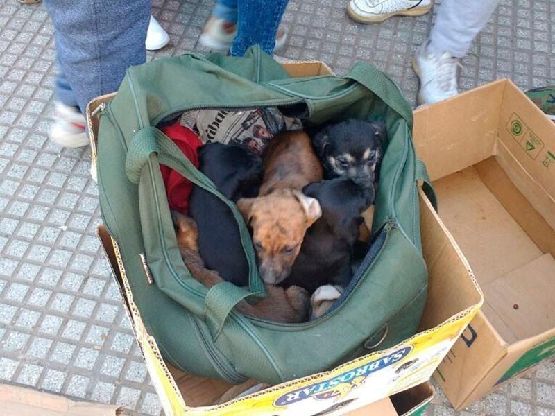 Animales rescatados en Feria de Pompeya