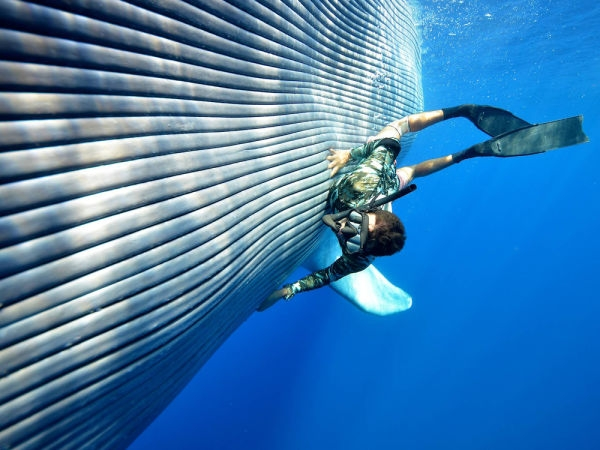 Whale-Diving-Dive-With-Whales-Tonga-1