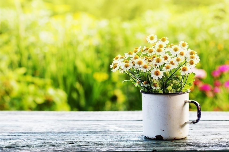 Flores y personalidad- margarita