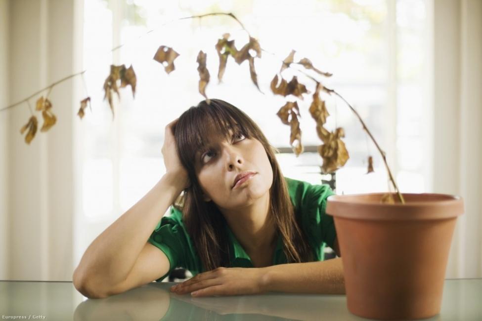 cómo salvar una planta seca
