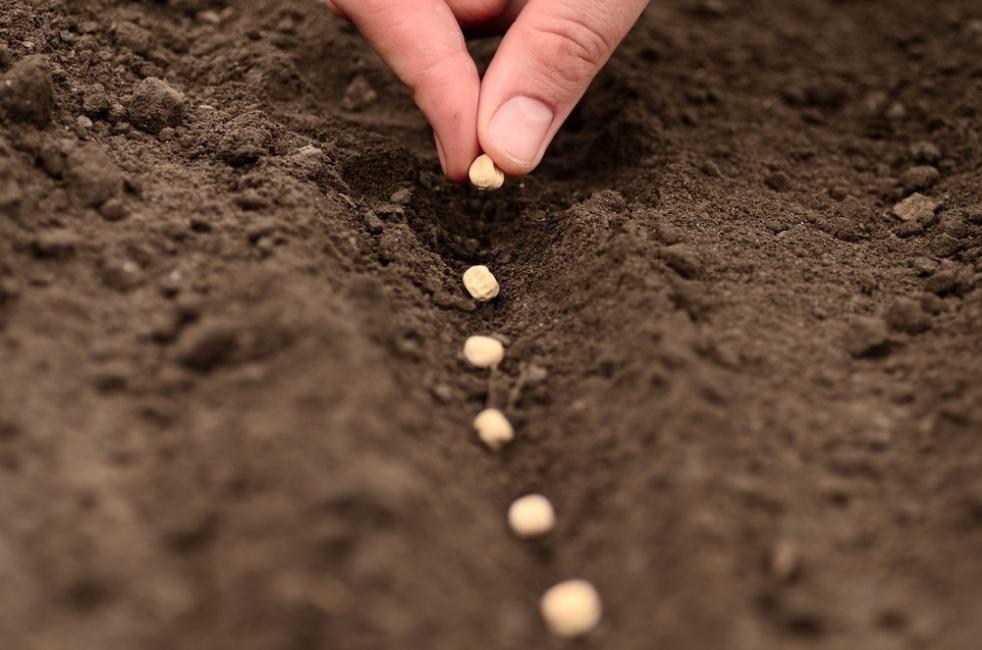 tecnologías eco-friendly- semillas