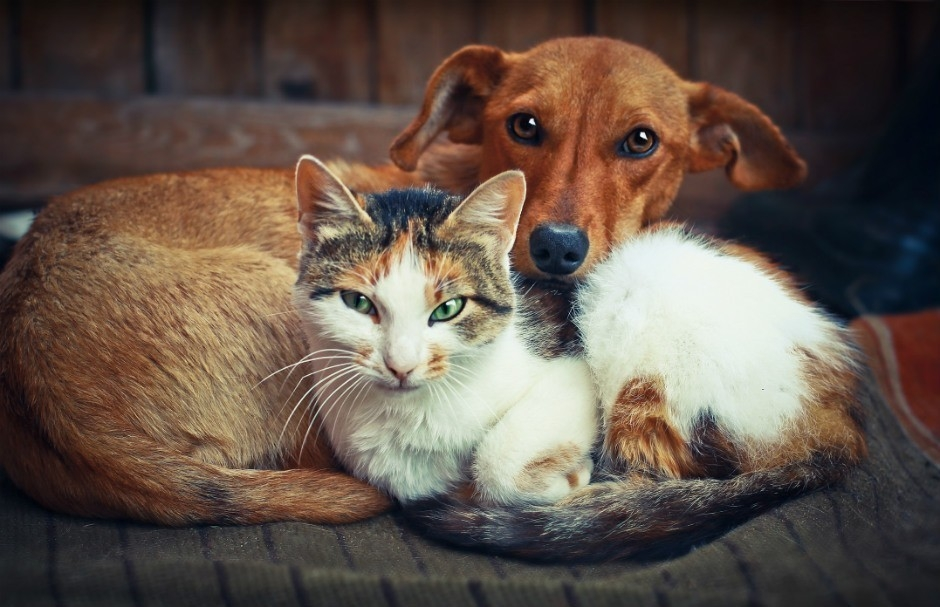 La norma aplica para animales de compañía