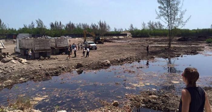 manglar de tajamar destruido