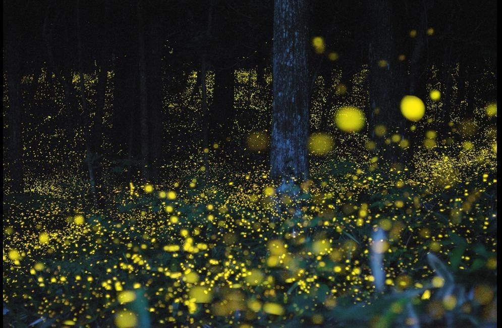 Consejos para atraer luciérnagas- bosque