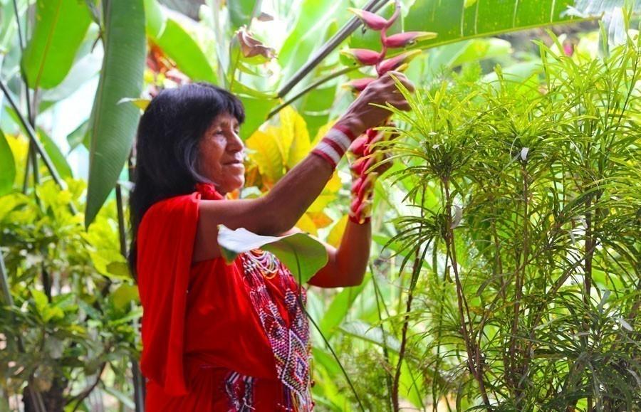 5 plantas shamánicas que sanan tu cuerpo- libro hierbas y plantas curativas de Fernández Chiti