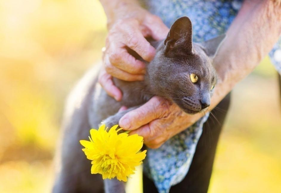 beneficios de tener un gato para la salud  - ancianos