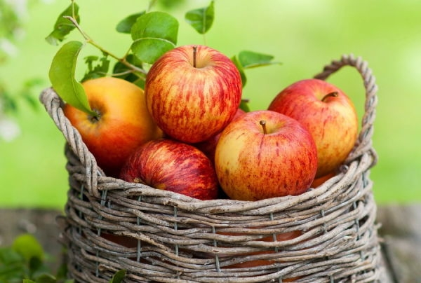 108688__red-apples-in-wooden-basket_p
