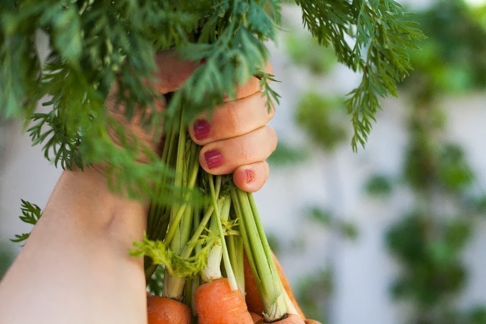 partes de los vegetales que se desechan- hojas de zanahoria