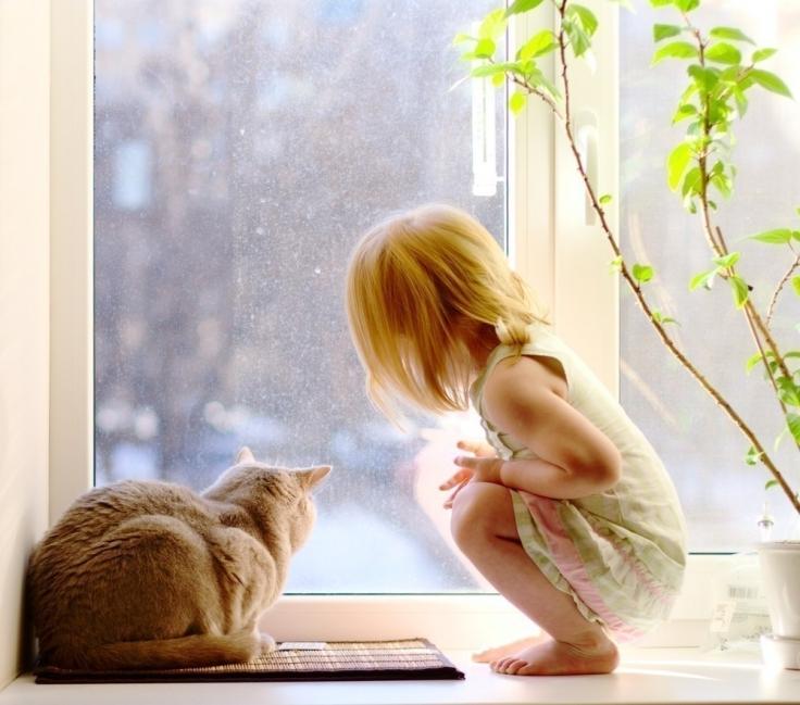 beneficios de tener un gato para la salud  - sistema inmunológico niños