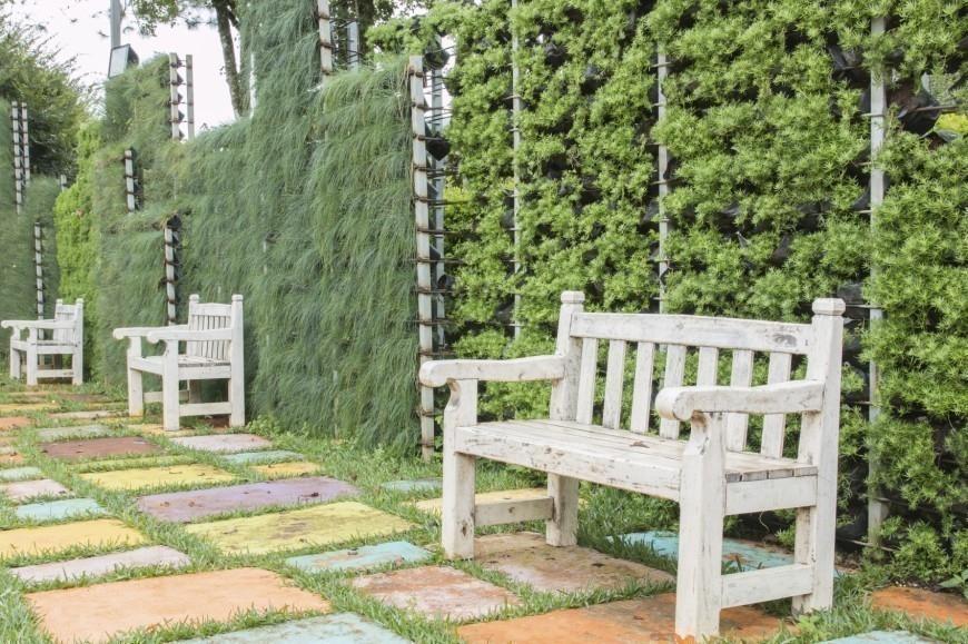 Ideas para crear divisiones verdes en tu jardín - medianera con enredaderas