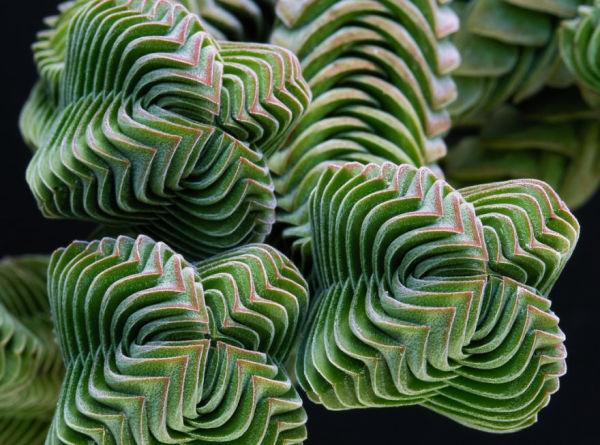 plantas-geometricas-8