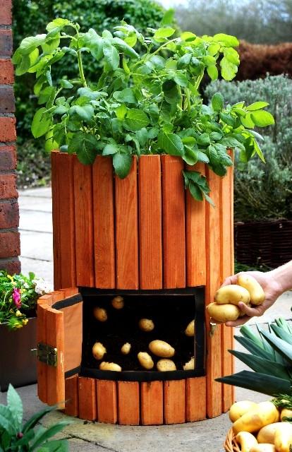 potato-barrel
