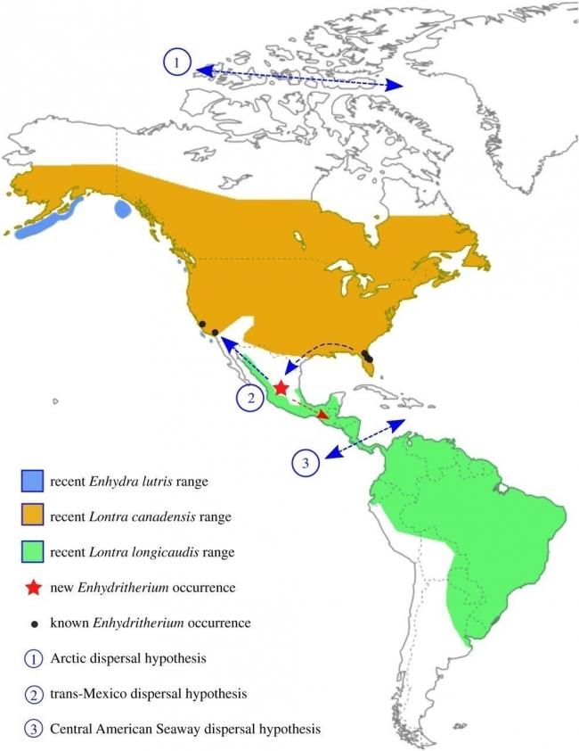 Territorio donde habitó Enhydritherium terraenovae