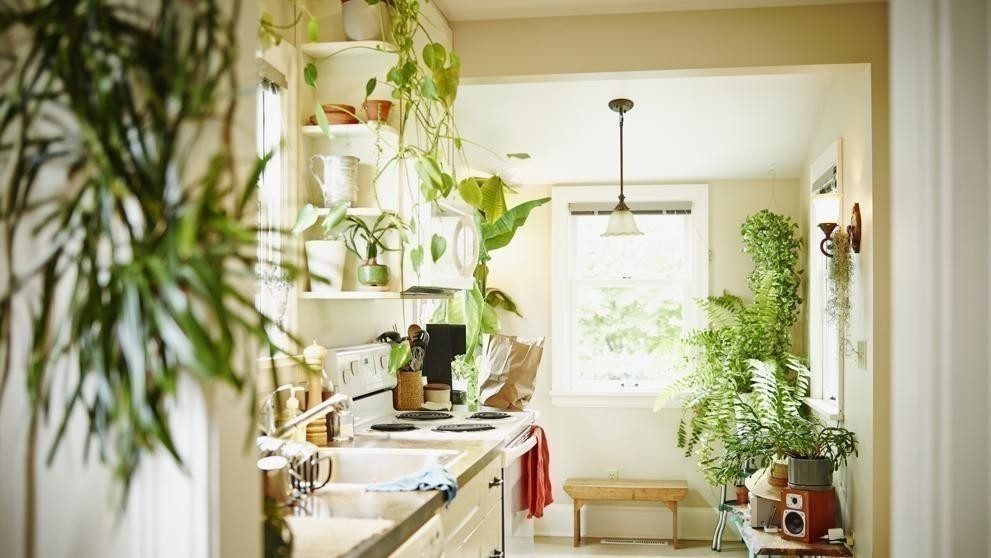 12 Ideas Para Decorar Con Plantas Bioguia