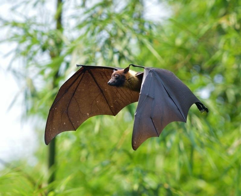 murciélagos sangre