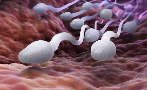Entre 1973 y 2011, el conteo de esperma entre hombres occidentales ha reducido