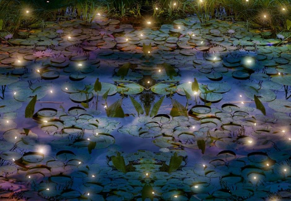 Consejos para atraer luciérnagas - estanque