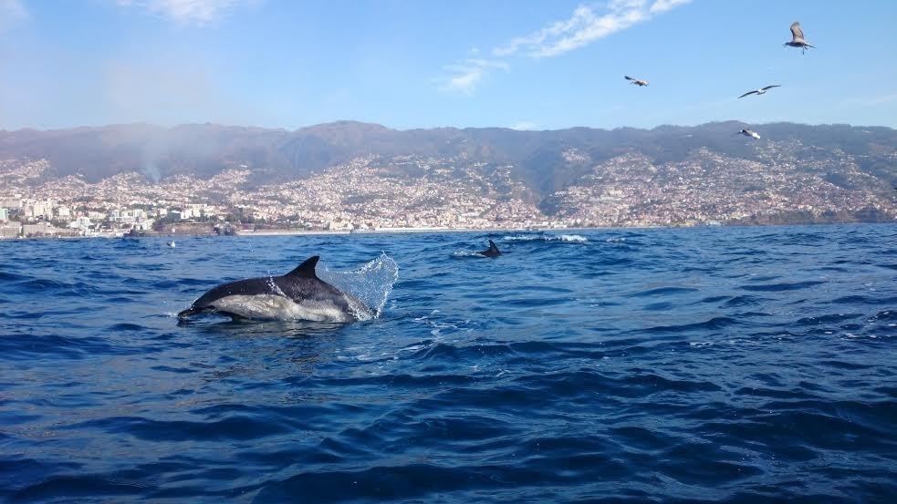 Baia dos Golfinhos, Brasil    delfines