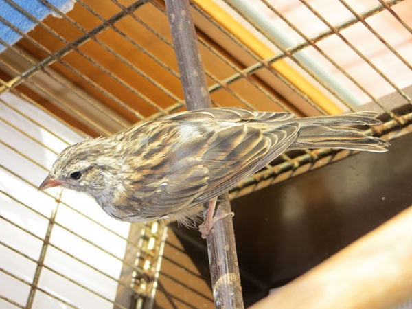 bird-day33