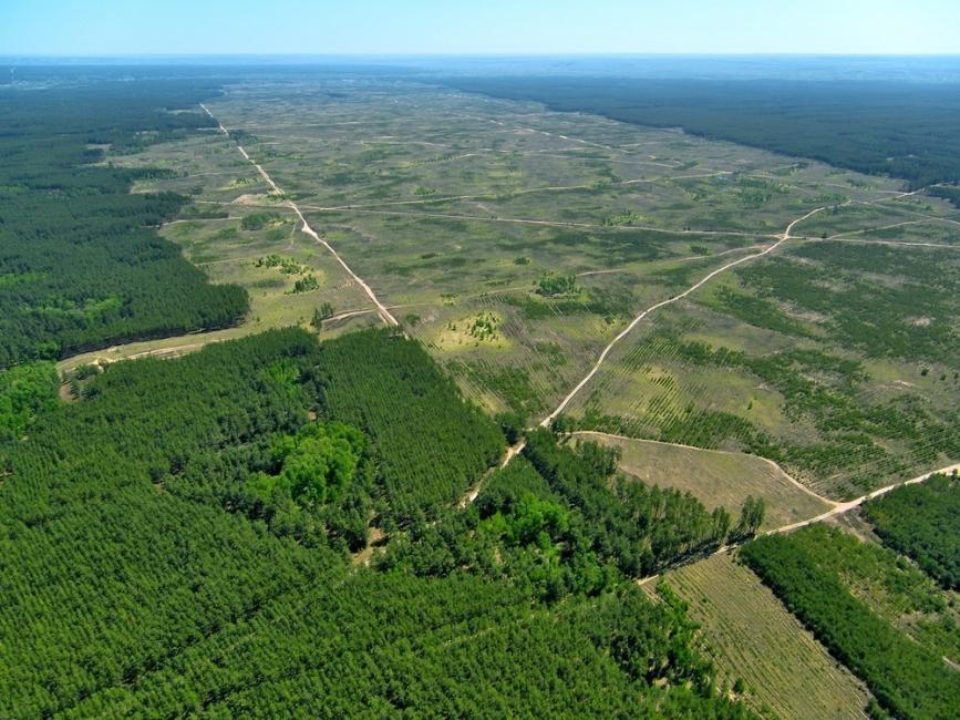Vista aérea de la deforestación