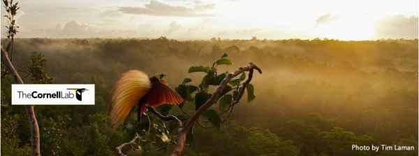aves del paraiso (11)