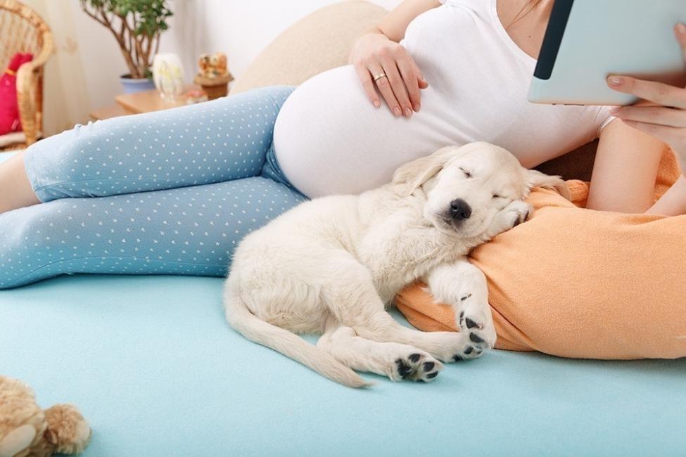 beneficios de tener un perro durante el embarazo- siesta