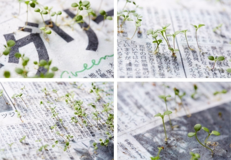 Un nuevo periódico que después de ser leído se convierte en plantas- green paper