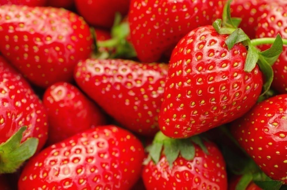 fresas en casa plantar